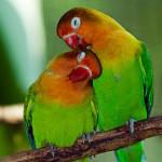 couple_inseparables